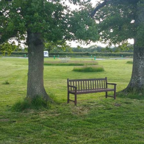 bench-under-trees